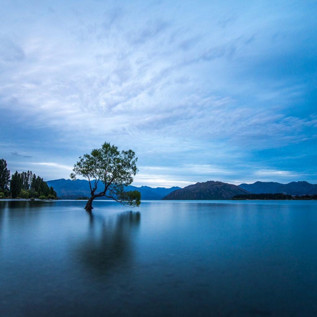 That Wanaka tree becomes a worldwide sensation on social media