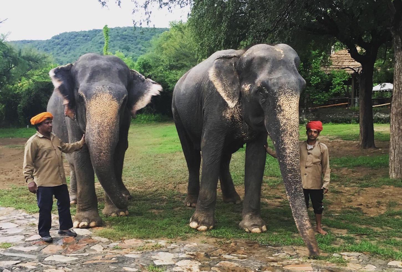 elephants executive edge travel