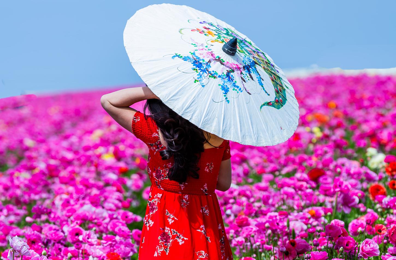 Carlsbad-flower-fields
